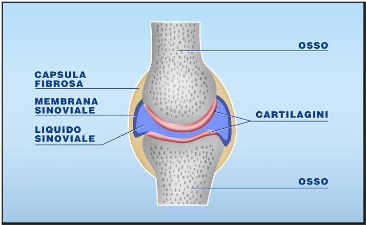 Quali tessuti possono essere trapiantati: le cartilagini