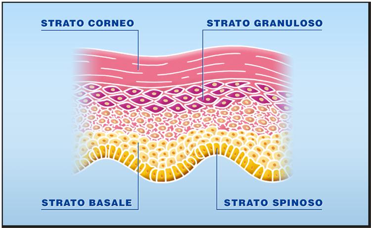 Quali tessuti possono essere trapiantati: la cute