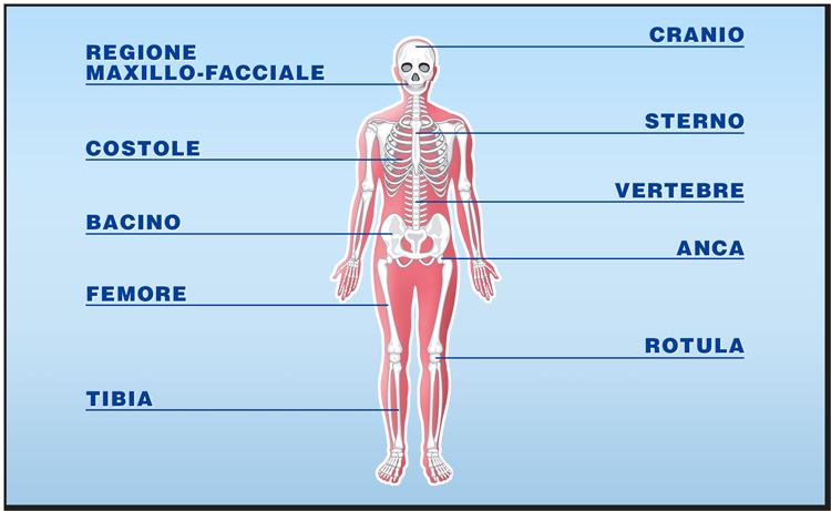 Quali tessuti possono essere trapiantati: il tessuto osseo