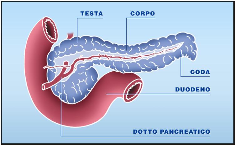 Quali organi possono essere trapiantati: il pancreas e le isole pancreatiche