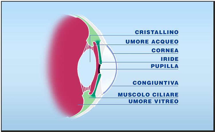 Quali tessuti possono essere trapiantati: la cornea