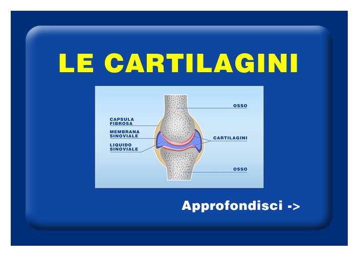 Quali organi e tessuti possono essere trapiantati - Le cartilagini
