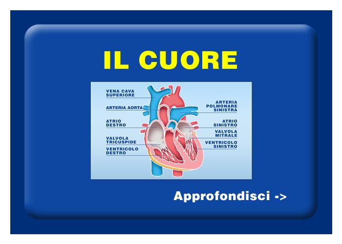 Quali organi e tessuti possono essere trapiantati - Il cuore