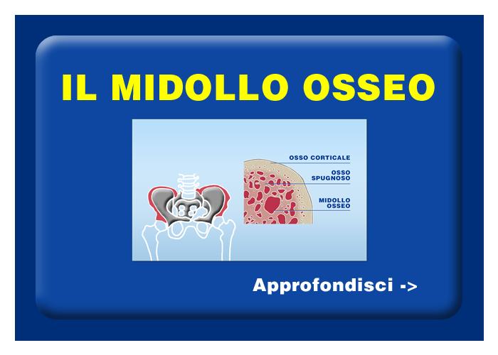 Quali organi e tessuti possono essere trapiantati - Il midollo osseo
