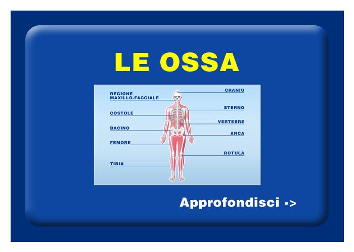 Quali organi e tessuti possono essere trapiantati - Le ossa