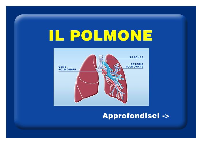 Quali organi e tessuti possono essere trapiantati - Il polmone