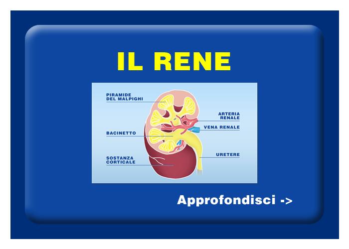 Quali organi e tessuti possono essere trapiantati - Il rene