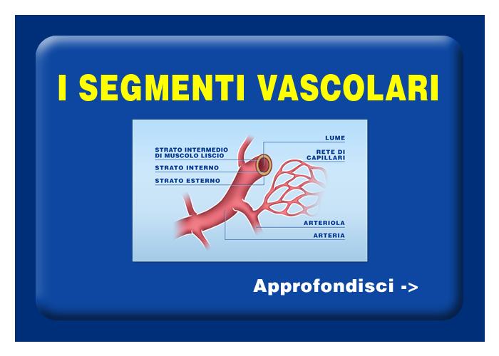 Quali organi e tessuti possono essere trapiantati - I segmenti vascolari