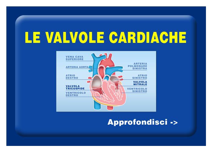 Quali organi e tessuti possono essere trapiantati - Le valvole cardiache