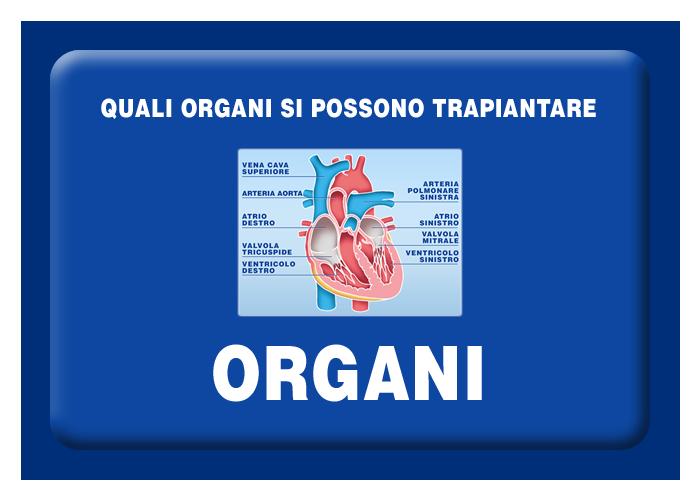 Quali organi e e tessuti si possono trapiantare